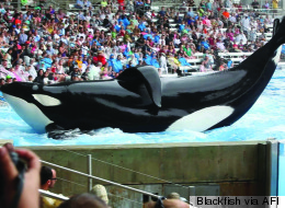 The <i>Blackfish</i> Effect: How Animal Rights Advocates Are Winning