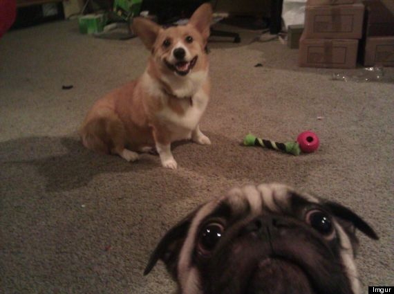 dog photobombs