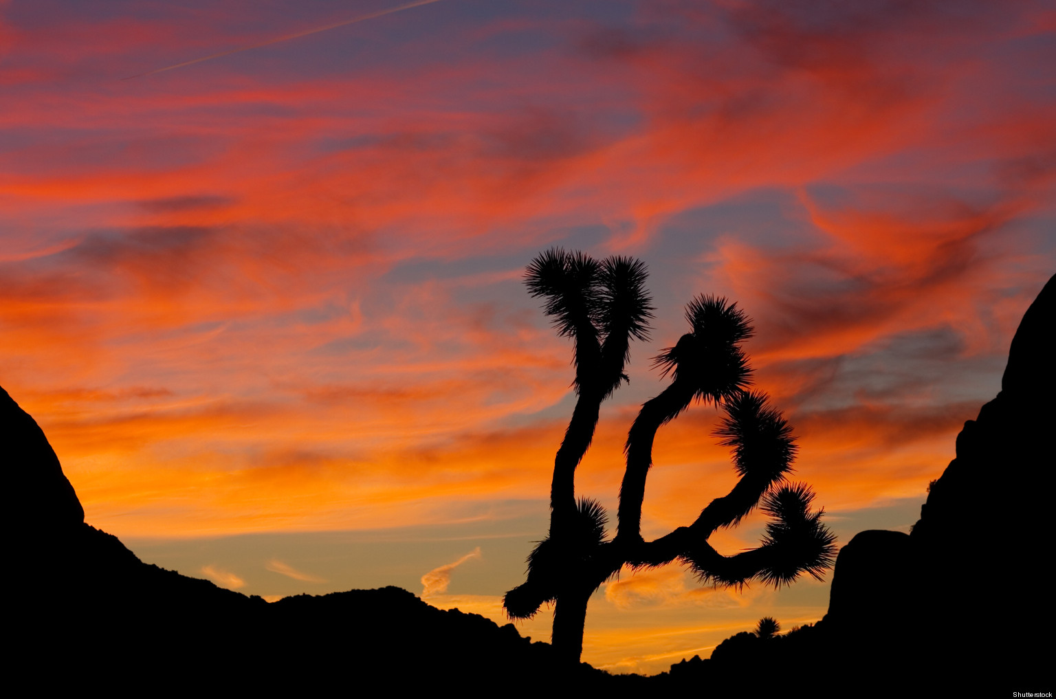 A Major Win For Joshua Tree!