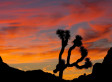 Joshua Tree Landfill Scrapped; Original Plans Would Have Placed Dump Less Than 2 Miles From National Park