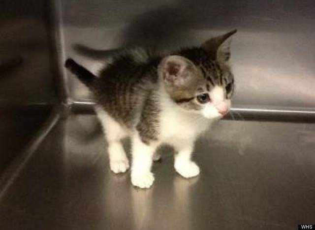 stolen kitten washington humane society offers 1000 for