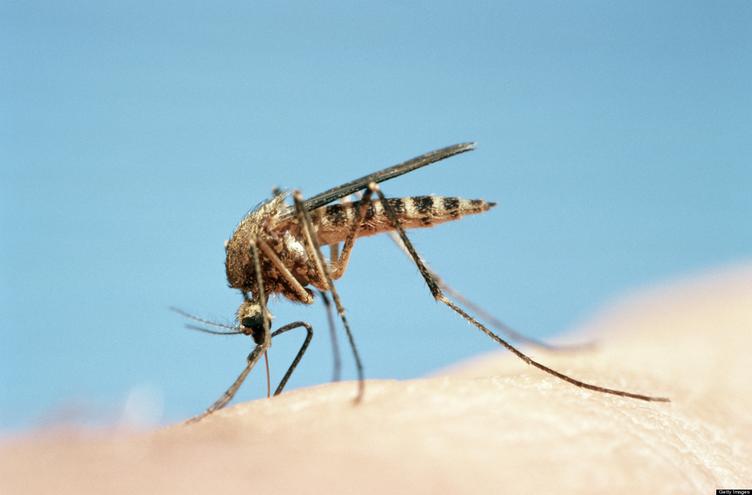 insect mosquitoes The most effective way to avoid west nile virus disease is to prevent mosquito bites be aware of the west nile virus activity in your area and take action to protect.