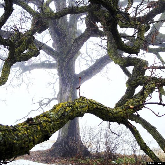 that tree photos