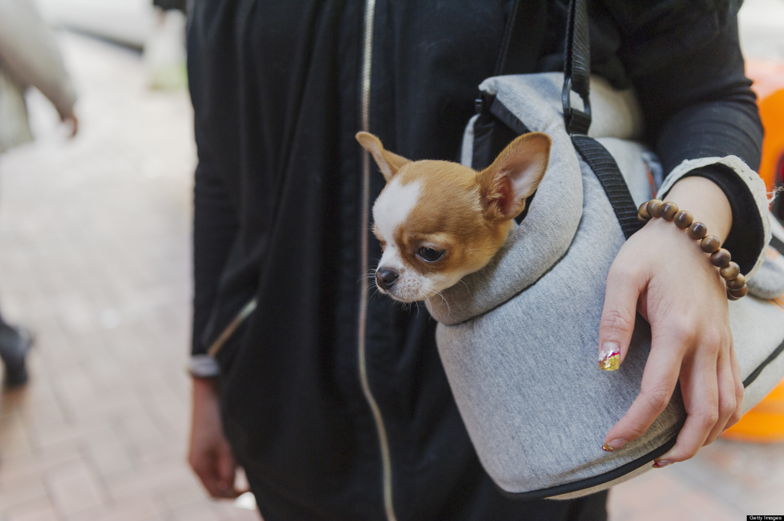 Puppy Lemon Law': Illinois House OKs Consumer Protection Plan As ...