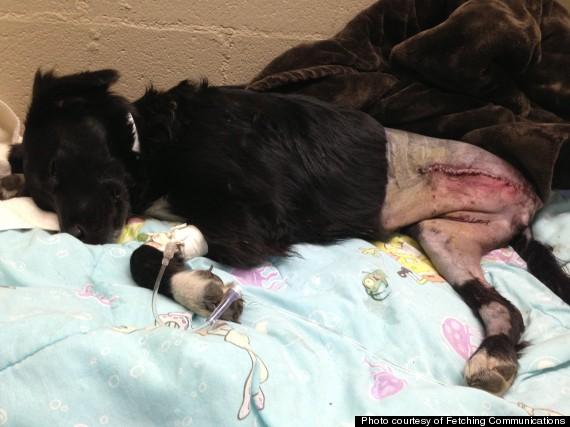 puppy hit by rtd train