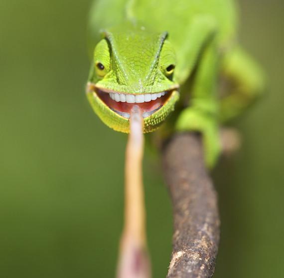 chameleonbiden