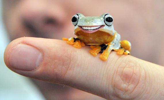 20 animals with joe bidens teeth photos huffpost