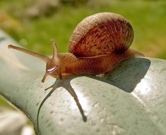 snailbiden