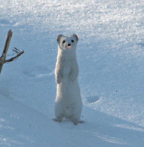 snowweaselbiden