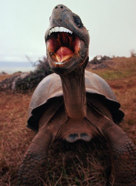 tortoisebiden