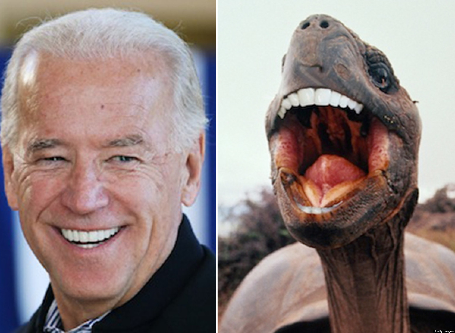 Smiling Animals With Human Teeth