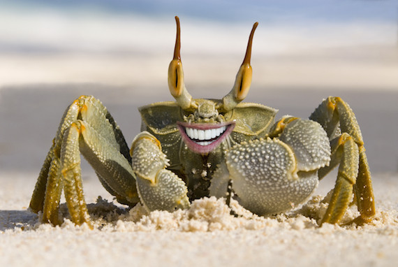 crabbiden