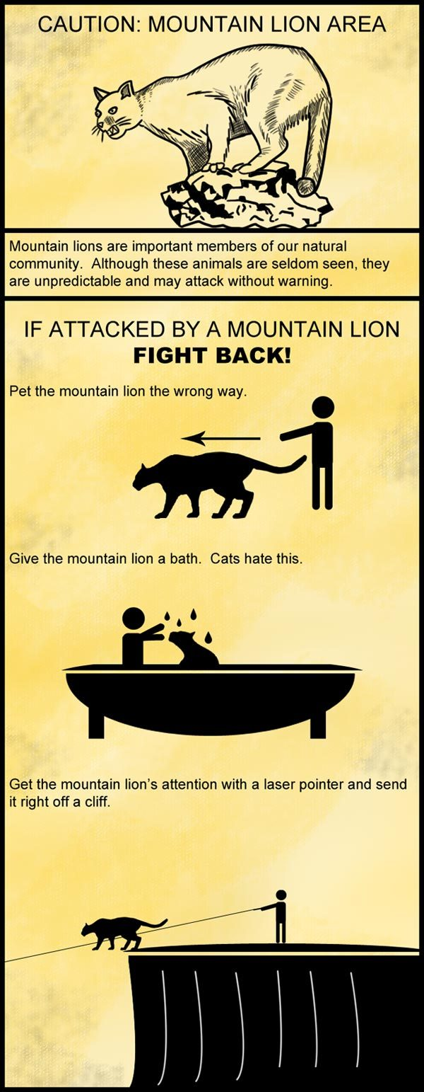 how to fight off mountain lion