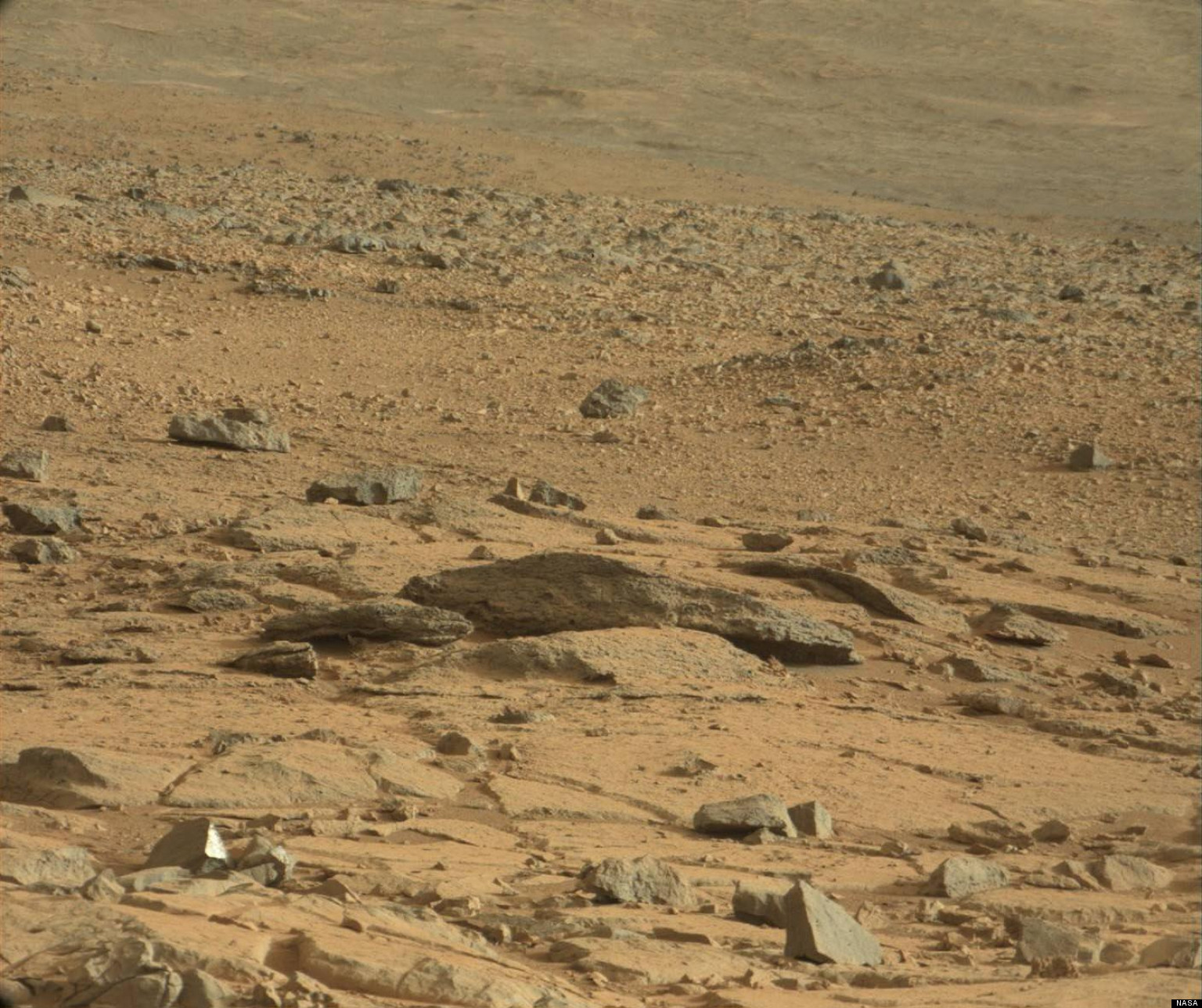 mars rover finds animal - photo #47