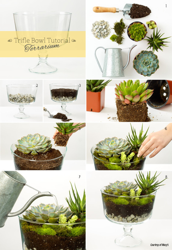 Terrariums vases and two other diy ideas made from a glass trifle bowl photo huffpost - Fun diy home decor ideas ...