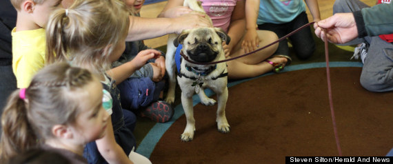 Xander Blind Pug Therapy Dog