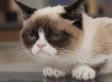 Grumpy Cat Movie: Popular Internet Meme Inks Hollywood Movie Deal