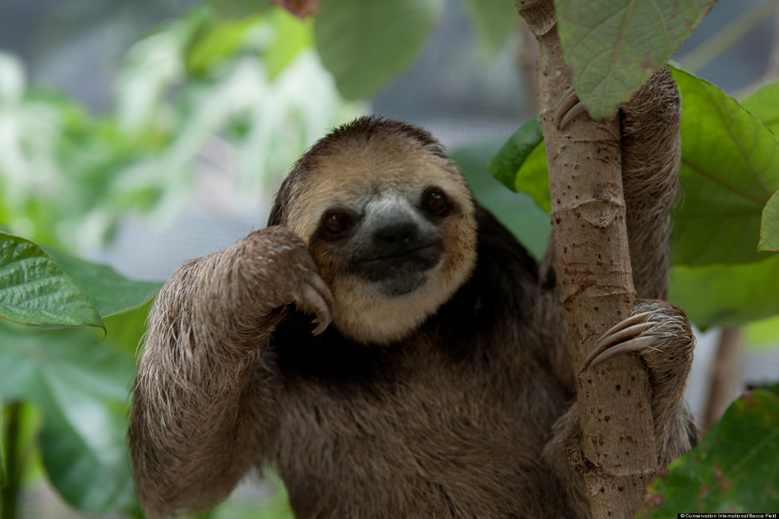 o-PHOTOS-OF-SLOTHS-facebook.jpg
