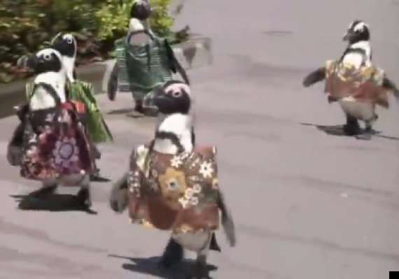 penguins african dress