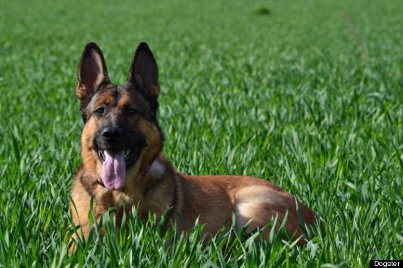 hero dog lucca