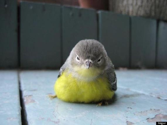angry animals want reddit imgur don bird via