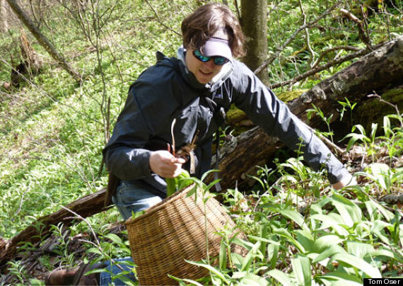 foraging tips