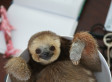 Sloth Pictures Show Animals' Quirky Side After Woman Rescues Hundreds (PHOTO)