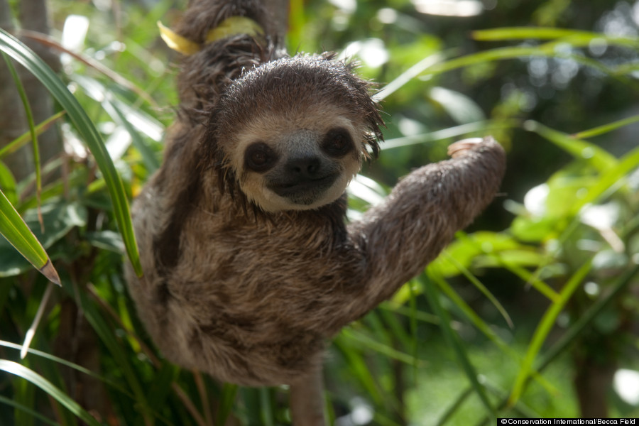 sloth images