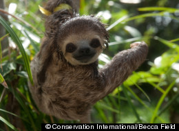 PHOTO: The Cutest Sloth Of The Week