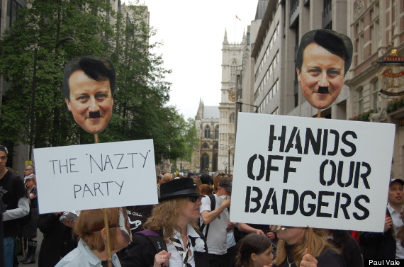 badger protest