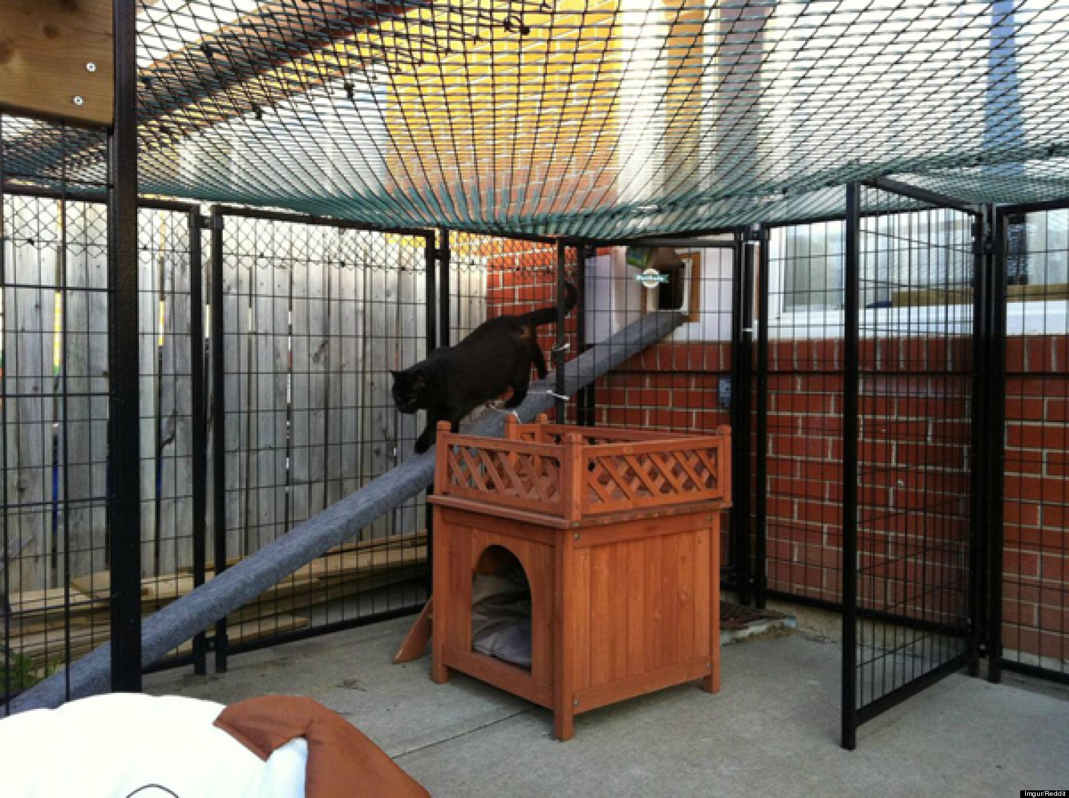 reddit user builds catio for special needs cat stops