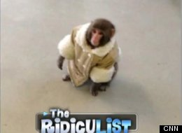 What Ever Happened To The IKEA Monkey?