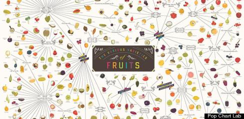 fruit varieties infographic chart