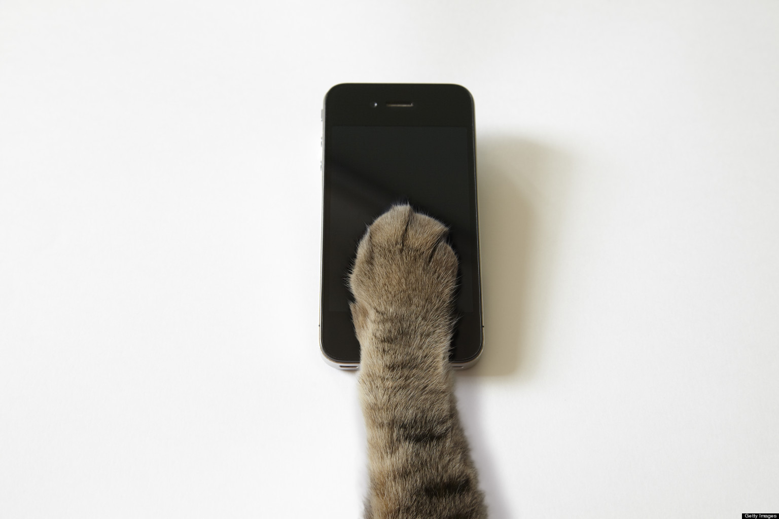 Image result for cat with a phone