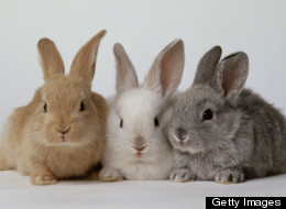 20 Tiny Bunnies With Terrible Advice