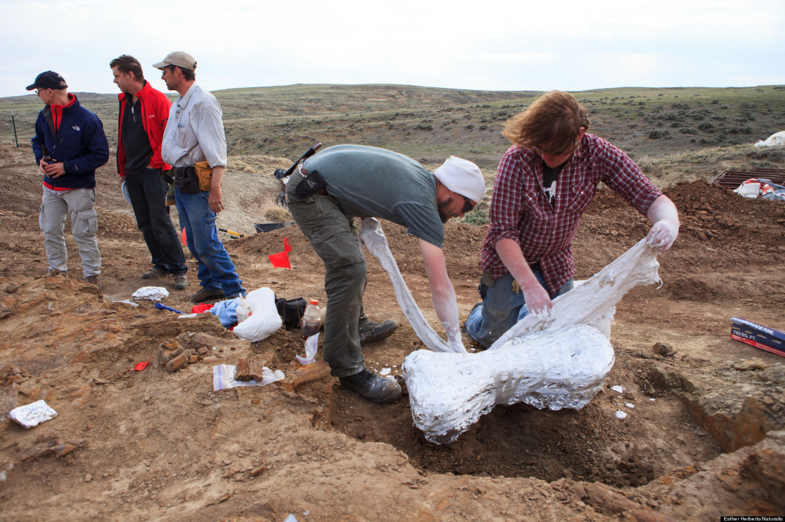 UNEARTHED: Beloved Dinosaur's Nearly Intact Skeleton