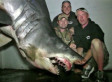 Possibly Largest Mako Shark On Record, 1,300 Pounds, Caught Off Huntington Beach (VIDEO)