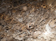 Mass Graves Discovered In Jaffa Containing Palestinian Bodies Predating 1948 Arab-Israeli War (PHOTOS)