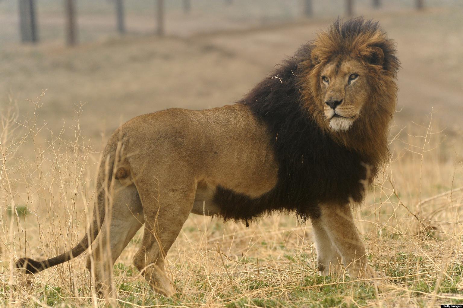 'Lion Ark' Documentary...
