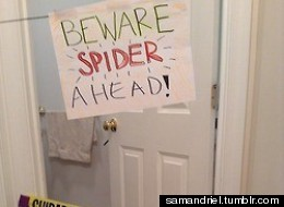 I Don't Know How Other People Handle Spiders But..