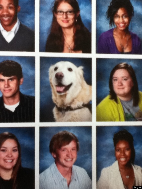school s comfort dog pictured in senior yearbook photo huffpost
