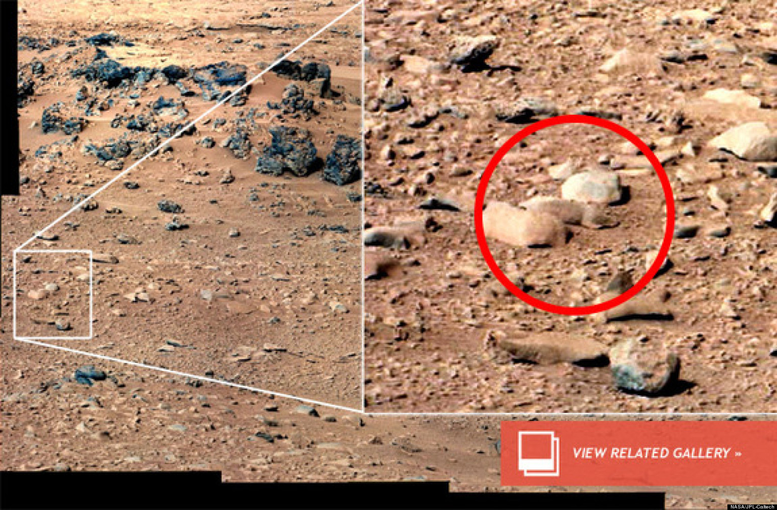 Mars Rat Wont Be Analyzed By Rover As Curiosity