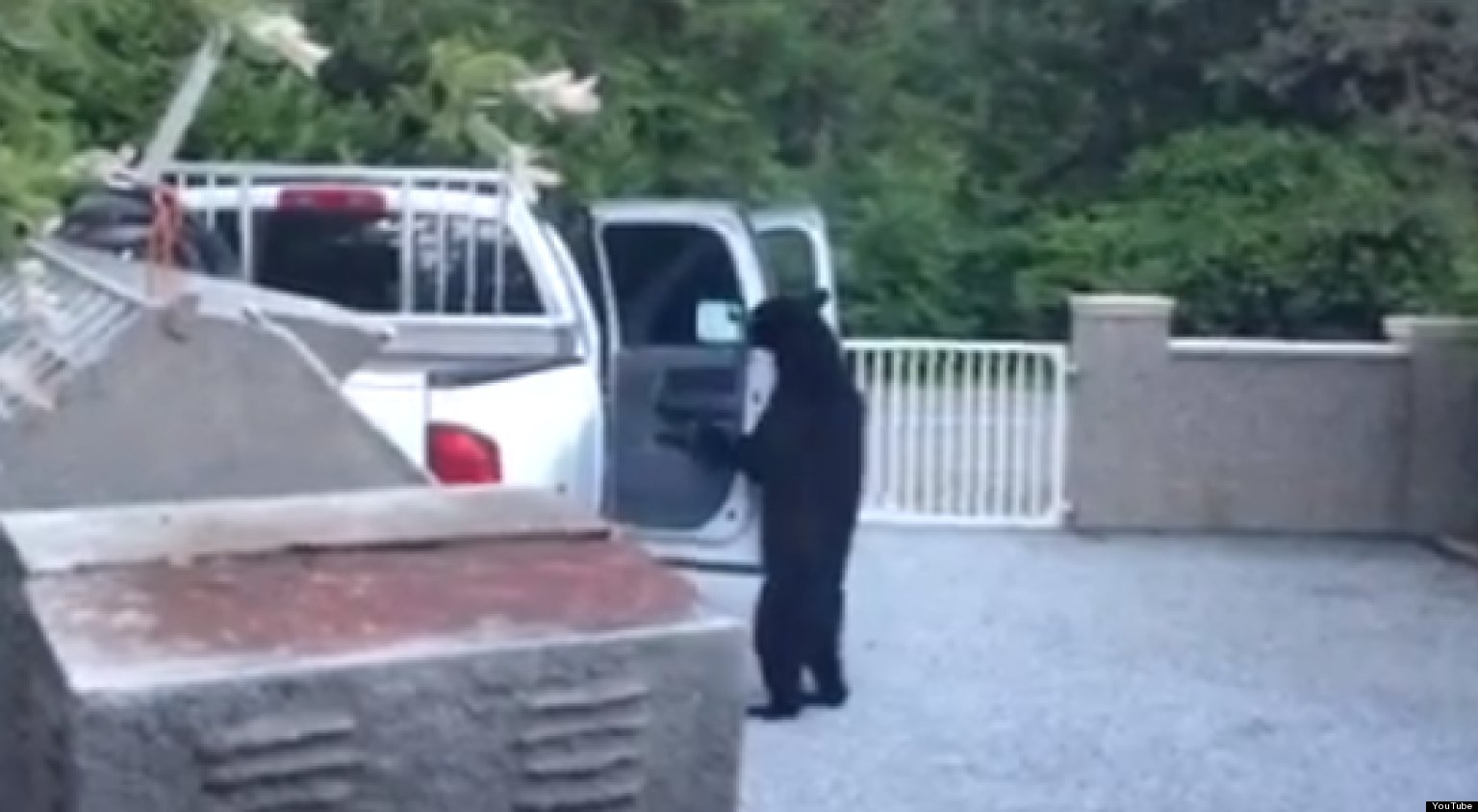 Maple Hill Auto >> Bear Breaking Into Truck Is The Funniest Criminal Ever (VIDEO) | HuffPost