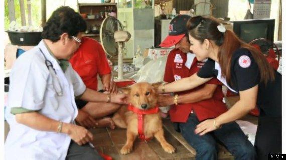 dog saves newborn thailand