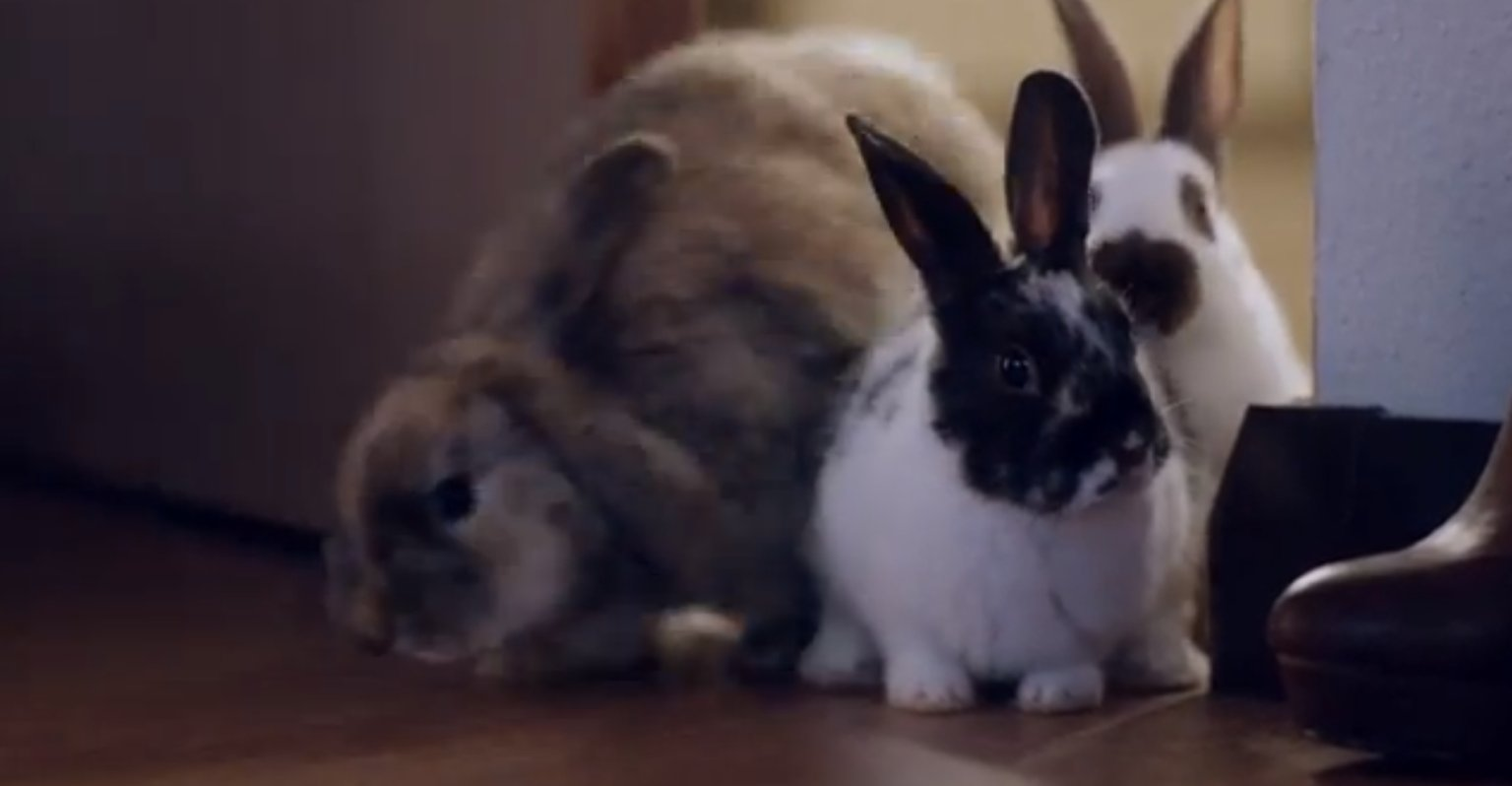 Ibis Rabbit Advert