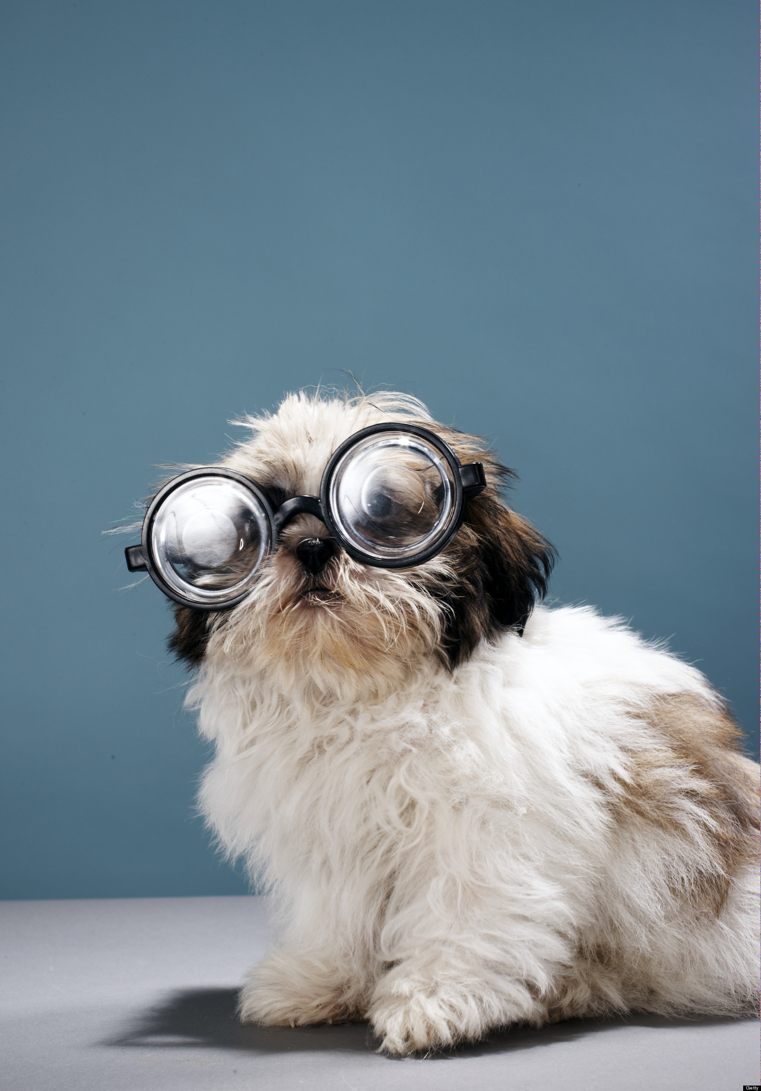 Does your dog need glasses sarah hodgson for What a dog needs