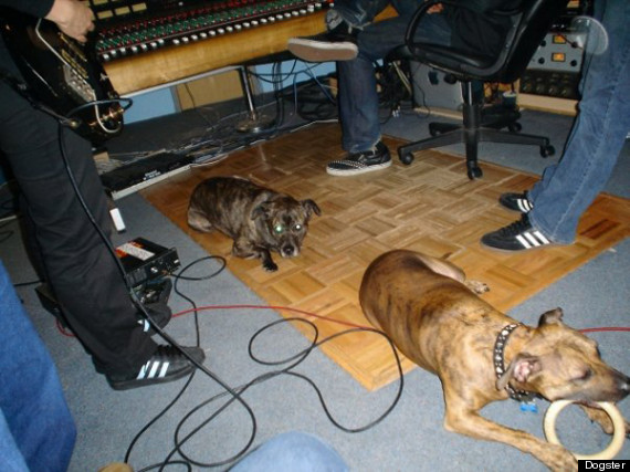 caninus dog band