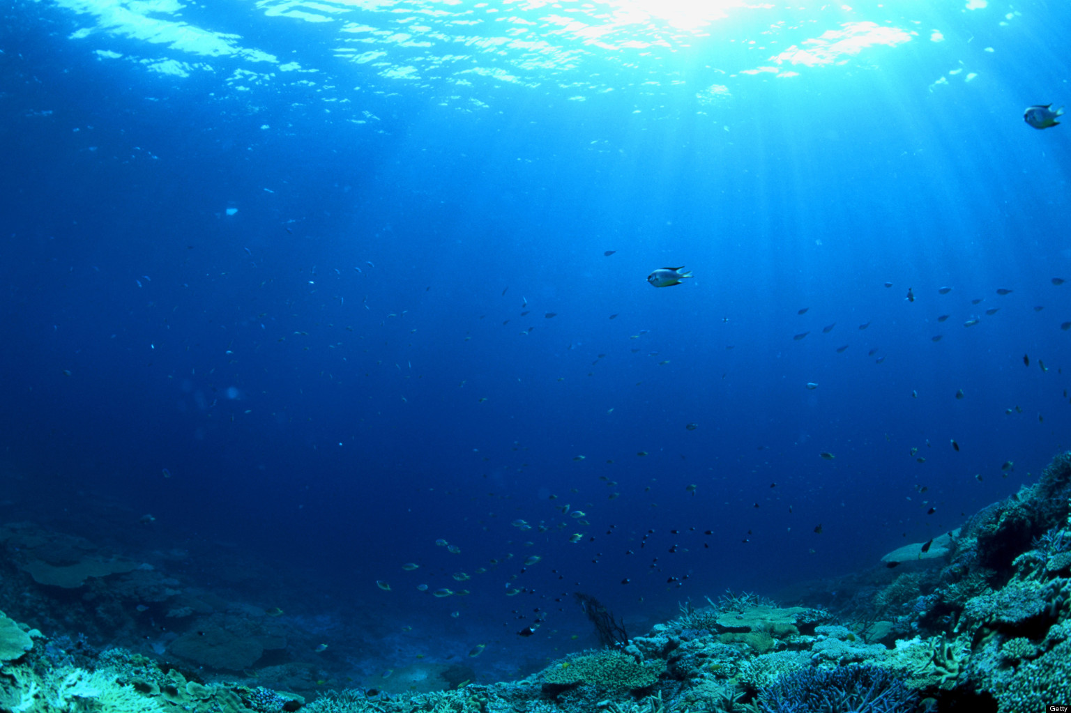 World oceans day 2013 time to celebrate conserve the for 10 facts about the ocean floor