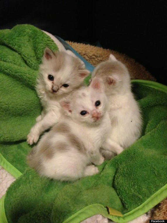 saving grace rescue kittens
