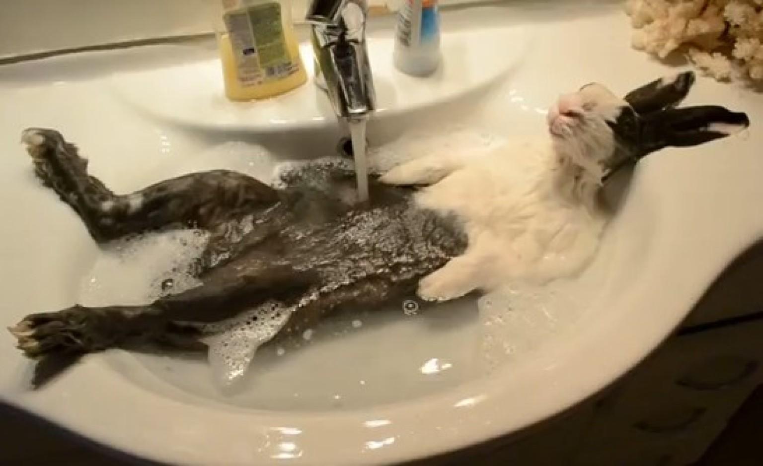 Animaux adorables un lapin qui prend son bain vid o - Comment laver serviette de bain ...